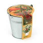 Pot zinc 12cm Tomate Cerise Bio