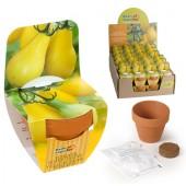 Mini kit tomate poire jaune bio