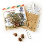 Graines d'arbres baobab du senegal