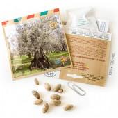 Graines d'arbres olivier de grèce
