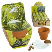 Mini kit arbres palmier