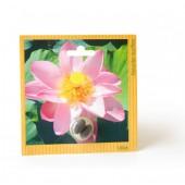 Graines exotiques lotus