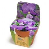 Mini kit fleurs Violette