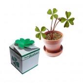 Mini kit Originalités Trèfle à 4 feuilles