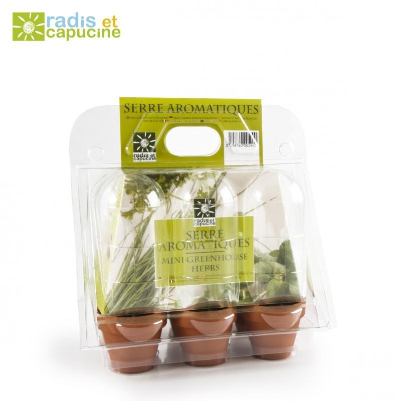 Serre en plastique plantes aromatiques