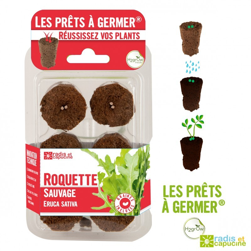PRETS A GERMER Roquette sauvage
