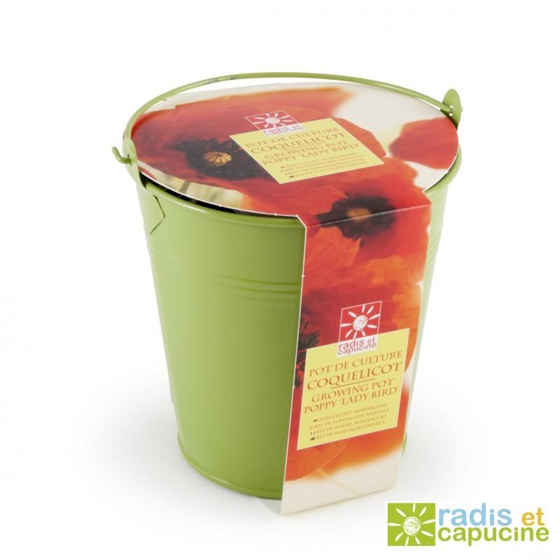 Graines de Coquelicot en pot de culture zinc colore