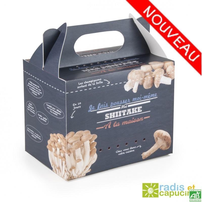 Kit champignon shiitake bio