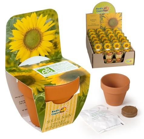 Mini kit fleurs soleil bio