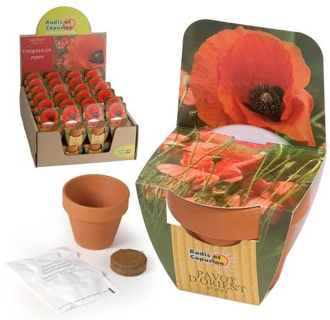Mini kit fleurs coquelicot