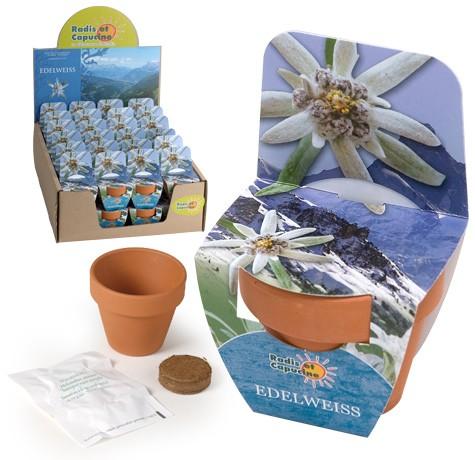 Mini kit fleurs edelweiss