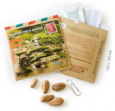 Graines d'arbres bonsaï du japon
