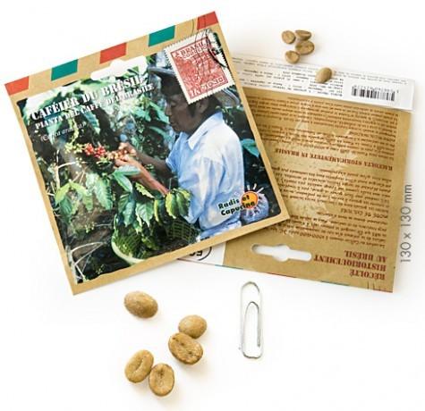 Graines d'arbres caféier du brésil