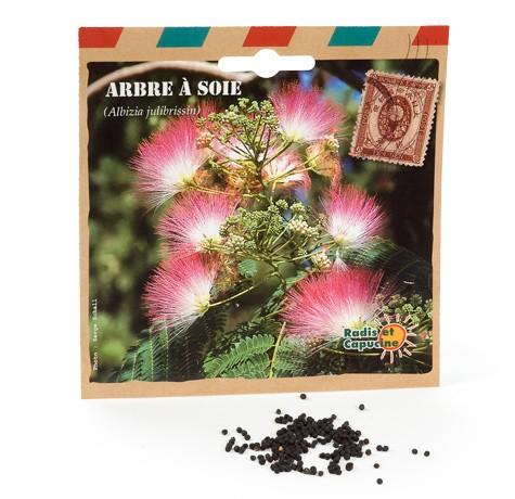 Graines d'arbres arbre à soie
