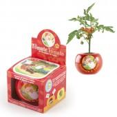 Benjamin le Lutin - Graines de Tomate Cerise en Pot de culture ceramique