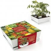 Graines de Tomate en carré potager
