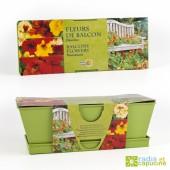Graines de Fleurs de balcons en jardinière de culture zinc colorée