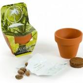 Graines de Palmier en pot de culture terre cuite