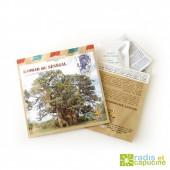 Graines de Baobab du Senegal en sachet