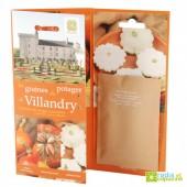 Carte 3 volets Villandry Potiron -Giraumon-Pâtisson blanc