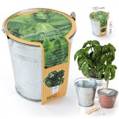 Pot zinc 12cm basilic 'grand vert' bio