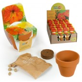 Mini kit fleurs capucine
