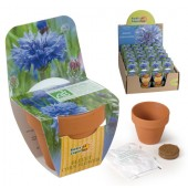 Mini kit fleurs bleuet