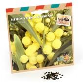 Graines d'arbres mimosa 4 saisons