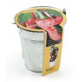Pot zinc 12cm piment de cayenne