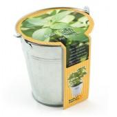 Pot zinc 12cm basilic/citron