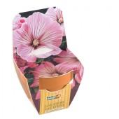 Mini kit fleurs lavatère rose